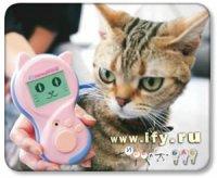 Бизнес на кошачьем переводчике.