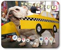 Бизнес идея. Такси для животных.