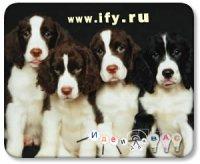 Бизнес идея: Детский сад для собак