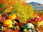 Сбор фруктов и овощей на дачных участках