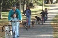 Бизнес идея: Городская упряжка для собак