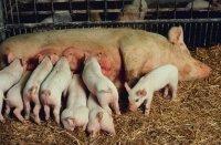 Утилизация птичьего помета и свиного навоза