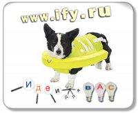 Бизнес идея: Спасательный круг для собак