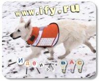 Бизнес идея: Современная собака–спасатель
