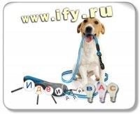 Обновленный дизайн поводка для собак
