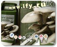 Бизнес идея: Наборы для выращивания грибов
