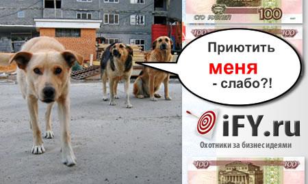 Бизнес идея: Обустройство бездомных собак.