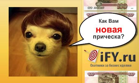 Бизнес идея: Открытие парикмахерской для животных
