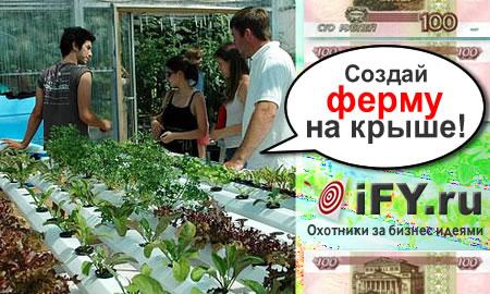 Строительство и эксплуатация ферм на крышах супермаркетов