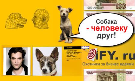 База данных бездомных собак