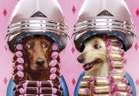 Салон красоты для животных – где организовать?