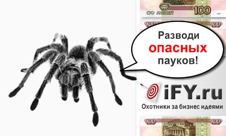 Бизнес идея разведения пауков