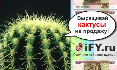 Бизнес идея выращивания кактусов