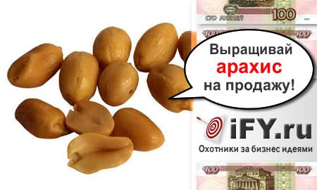 Бизнес идея выращивания арахиса