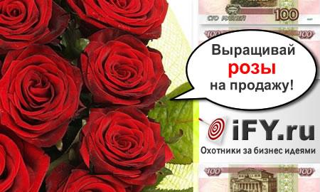 Бизнес идея выращивания роз
