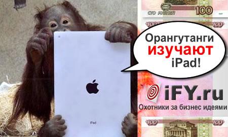 iPad поможет лучше понимать орангутангов