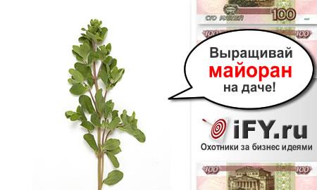 Бизнес идея выращивания майорана