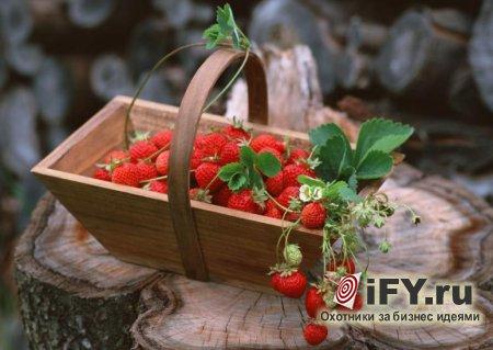 Бизнес идея выращивания земляники