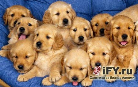 Новый сервис «Puppy Room», предлагающий снять стресс студентам
