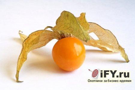 Идея бизнеса: выращивание физалиса и последующая его продажа